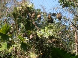 So many bird nests!
