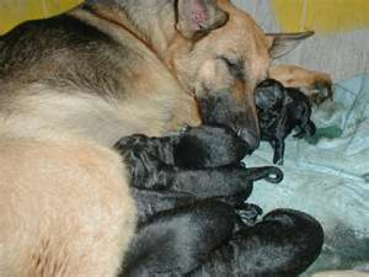Mom takes a nap with her litter