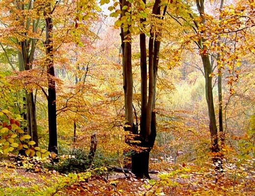 Autumn Elegance