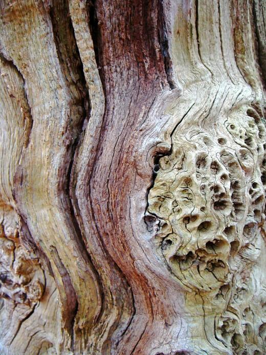 Oak bark pattern
