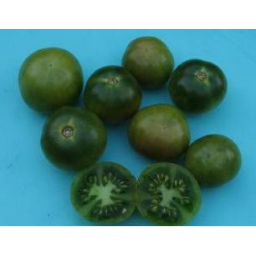 Green cherry tomato. (Aunt Ruby's German Cherry)