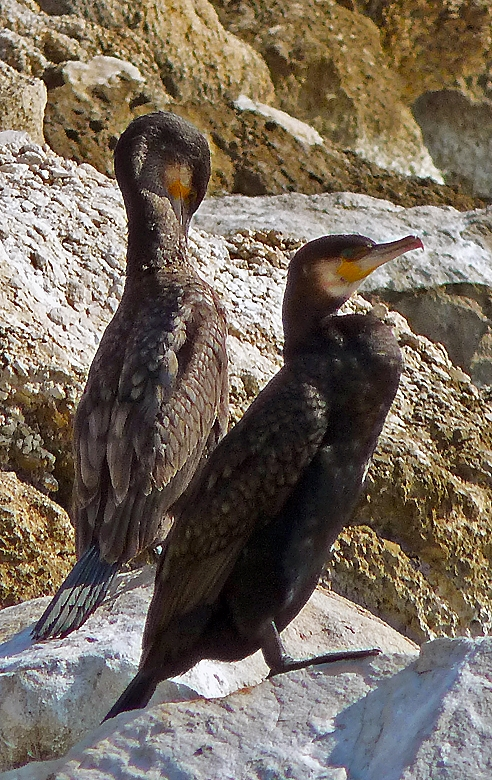They are striking looking birds