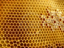 Honeycomb contains all of the nutritional value of raw honey