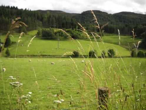 Beautiful rolling hills of Scotland