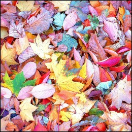 Put fallen leaves to work in your garden.