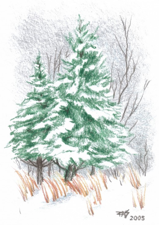 Snowy Fir Trees by Robert A. Sloan