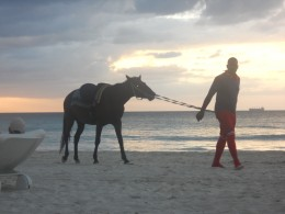 Horseback Riding is Offered on the Beach