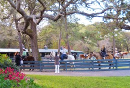 Riders at Lawton Stables in Sea Pines Plantation getting ready to go through the forest preserve.
