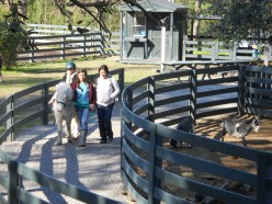 What are the benefits of therapeutic horseback riding and how is it different from regular riding?