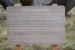 Octopus Tree Details