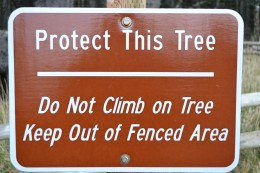 Protect the Octopus Tree