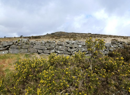 Dartmoor showing the yellow Gorse bushes in abundance here
