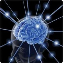 Memory one of the most important functions of the brain