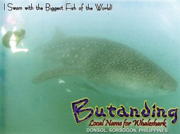post card bought after the Whale Shark Interaction tour