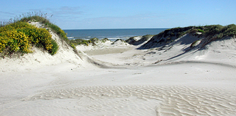 Padre Island sand dunes and Gulf of Mexico