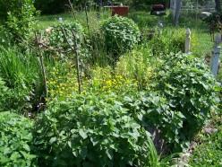 Plantings around Cheap DIY Pond