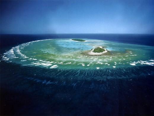 Organic Sedimentation - Coral Reef
