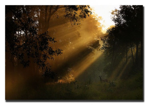 'GOOD MORNING, KANHA'  photograph by Kiran KK