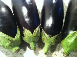 Eggplant most found in Europe and America