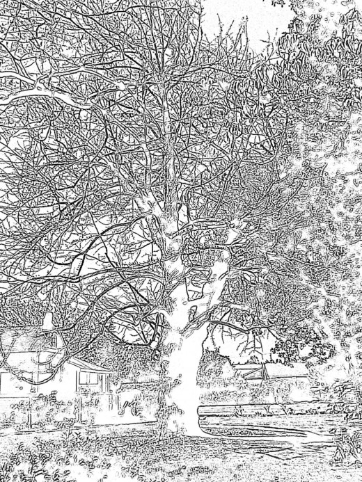 A pre-set drawing filter in the Olympus Stylus 5010 digital point and shoot camera: taken at Shinn Park in Fremont, Ca.