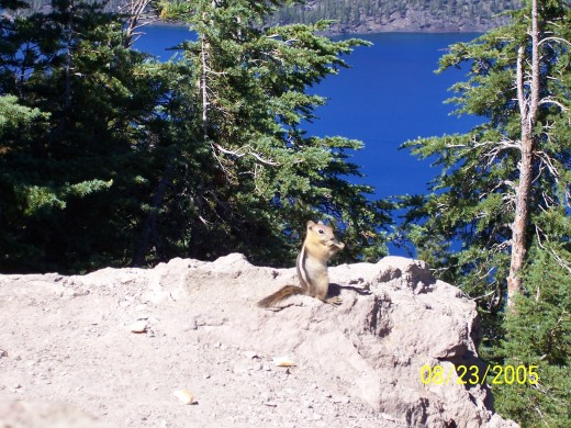 Crater Lake wild life ;)