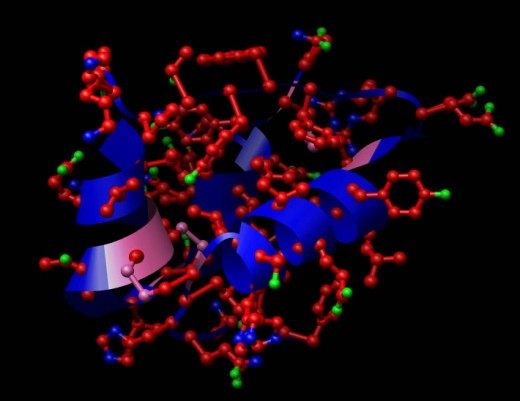 Structure of Insulin, a protein hormone. Red=Carbon, Blue=Nitrogen, Green=Oxygen, Pink=Sulfur.  Source: Wikimedia Commons, GNU Free Documentation License.