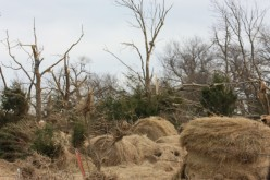 Hay bales and stripped trees after tornado.