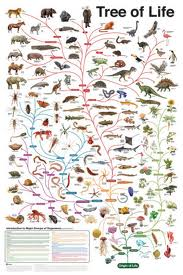 The tree of life according to evolution, showing species of life from the beginning to the creation of mankind, there are reason to believe that God helped life to evolve.