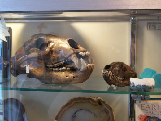 Animal skulls in odd shop; Our death pieces :)