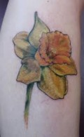 Daffodil Flower Tattoo Designs
