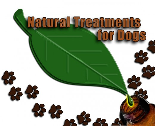 How to Treat Your Dog's Upset Stomach Naturally | PetHelpful