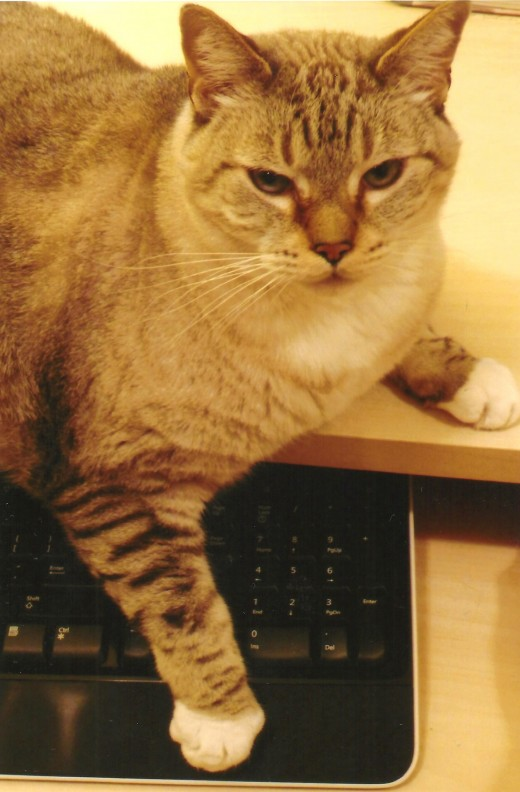Dusty helping out at the computer keyboard.  What would we do without him?