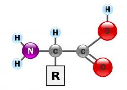 Amino acids - Amino acids are the building blocks of protein. Image Credit:YassineMrabet Yassine Mrabet via Wikimedia