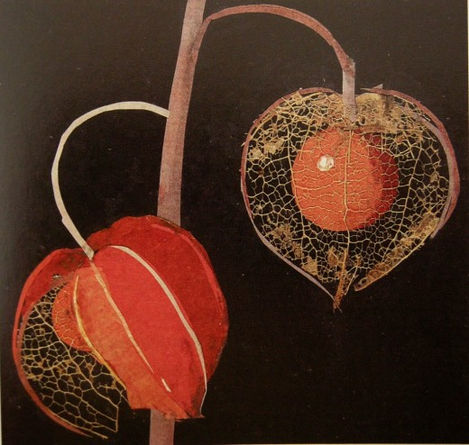 Detail of Physalis (Winter Cherry)