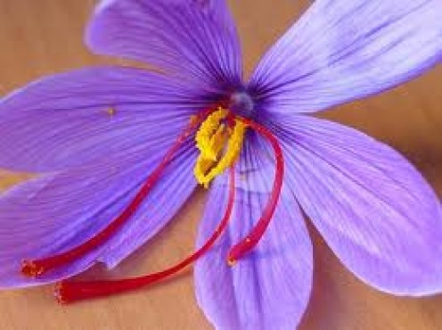 Saffron Flower with 3 Stigma or Filaments