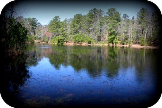 Edited picture of the pond along the Cape Fear River Trail