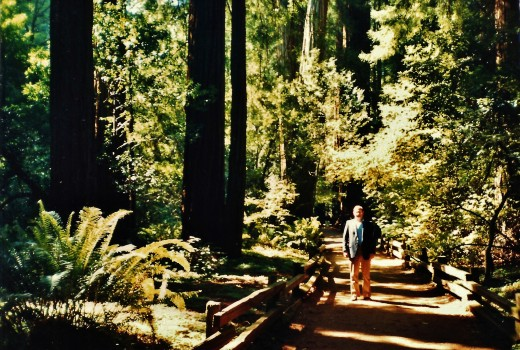 Pathways in Muir Woods National Monument