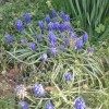 Spring Flowers Planting Guide: What To Plant When