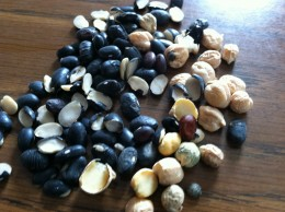 An assortment of black beans and garbanzo beans that did not make the cut