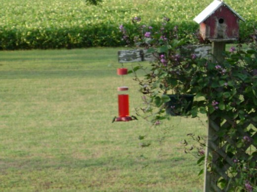 My hummingbird in my yard.