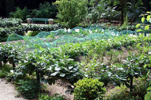 A vegetable garden in France