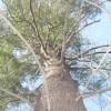 Lonera profile image