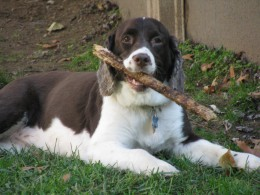 Bella with her stick