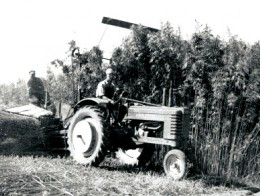 A hemp harvester near Waupun, Wisconsin circa 1942