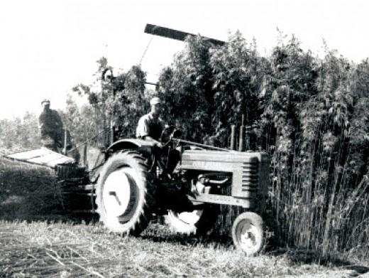 A hemp harvester near Waupun, Wisconsin circa 1942