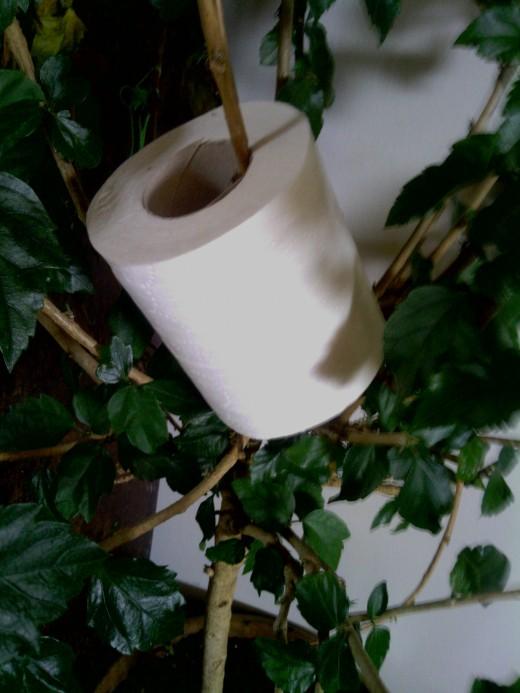 Toilet paper or leaf?