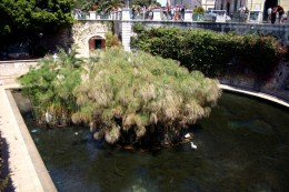 Arethusa spring, Sicily