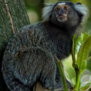 mbergo profile image