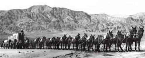 20 Mule Team rig moving borax in Death Valley. Late 1800s.