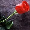 riyansingh profile image